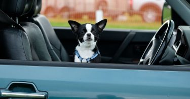 UBer Now Allows Users To Bring Pets Along On Ride, For A Fee